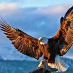 7 Leadership skills of an Eagle